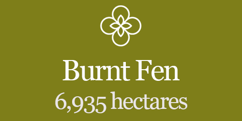 Burnt Fen