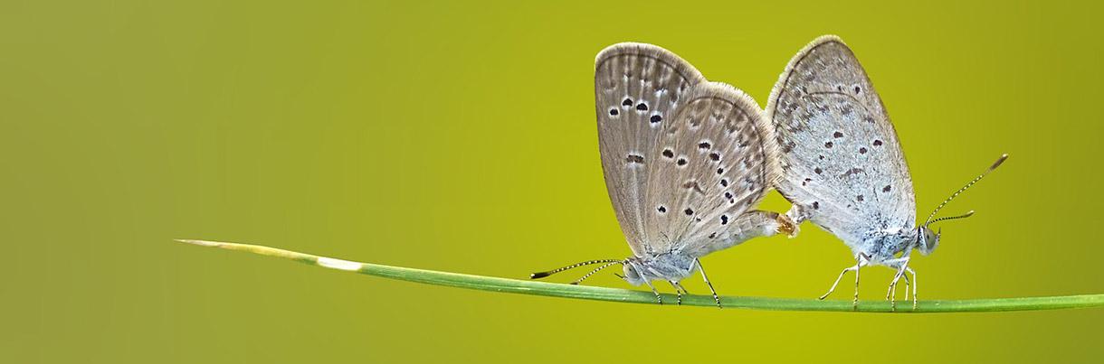 butterfly-1220